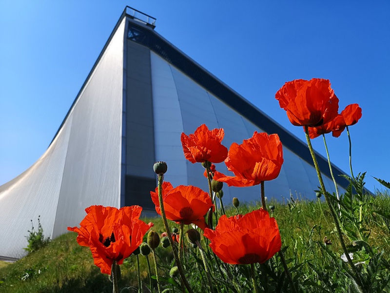 NCWE Poppies